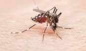 Malaria: Know the causes, symptoms and treatment and keep yourself safe this monsoon