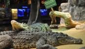 Fidel Castro's crocodile attacks man during party