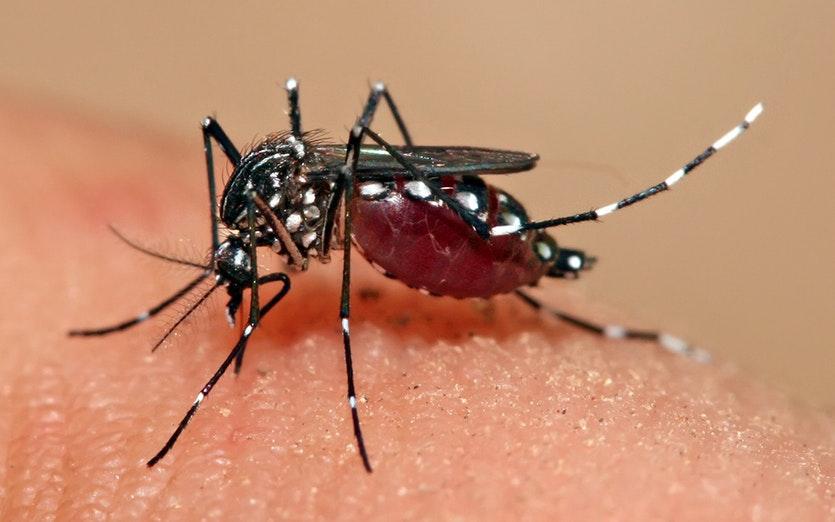 New dengue cases declining