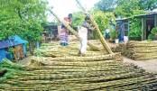Sugarcane for sale