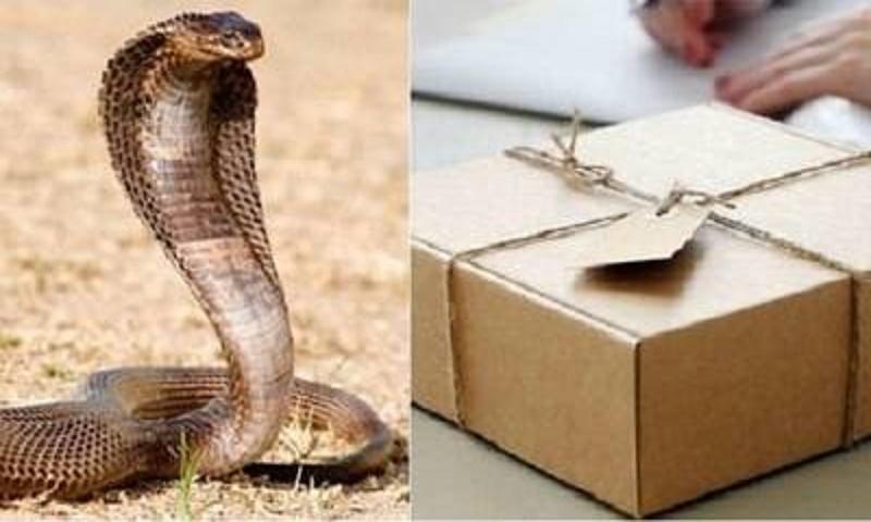 Indian man opens courier parcel, finds cobra inside