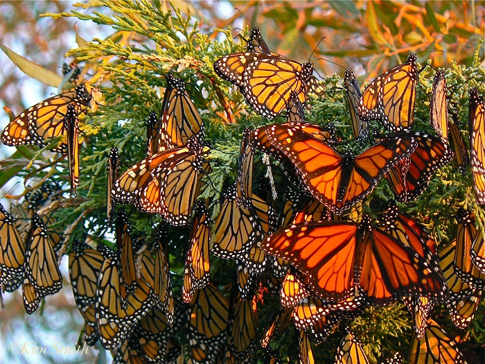 RCC to set up butterfly corner at central zoo
