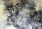 Brazil bans burning for two months to defuse Amazon crisis