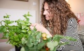 Types of basil to grow indoors and outdoors