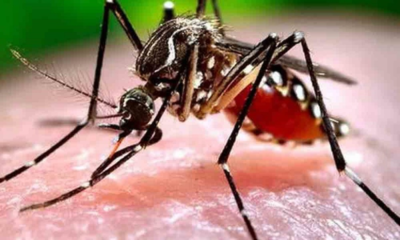 Study shows how chikungunya virus may cause joint pain