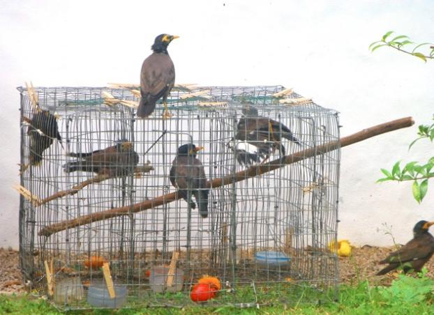 651 birds released at Botanical Garden after rescue