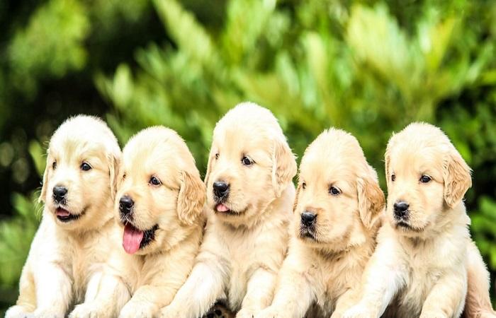 12 puppies beaten to death in Goregaon