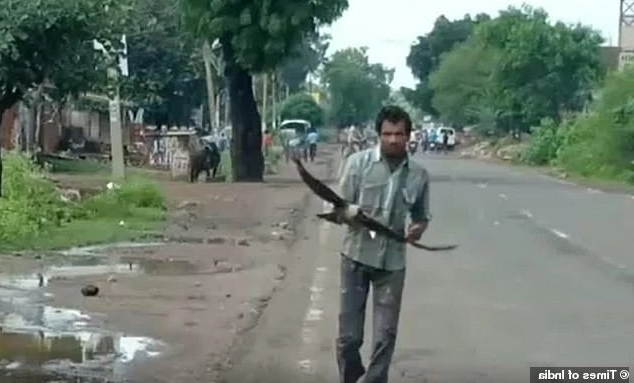 Crows attack this Indian man every day: Here's why