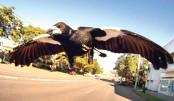 Magpie 'monster' shot dead following attacks