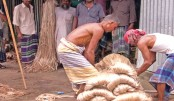 Low jute price frustrates Faridpur farmers