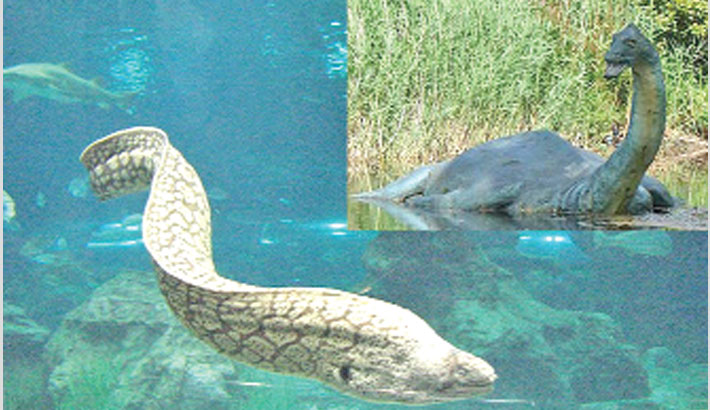 Could the Loch Ness monster be a giant eel?