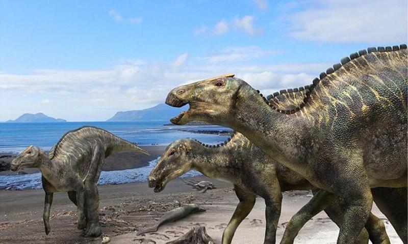 26-foot-long dinosaur roamed the earth 72 m years ago, skeleton found in Japan