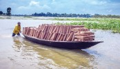 Bamboo-made fishing traps in knee-deep water to catch fish