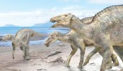 Japanese scientists find  new dinosaur species