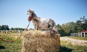Meet the smallest horse in the world