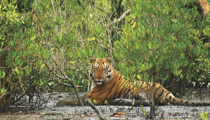 Government to use drones to protect Sunderbans