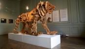 Leonardo da Vinci's mechanical lion goes on display in Paris