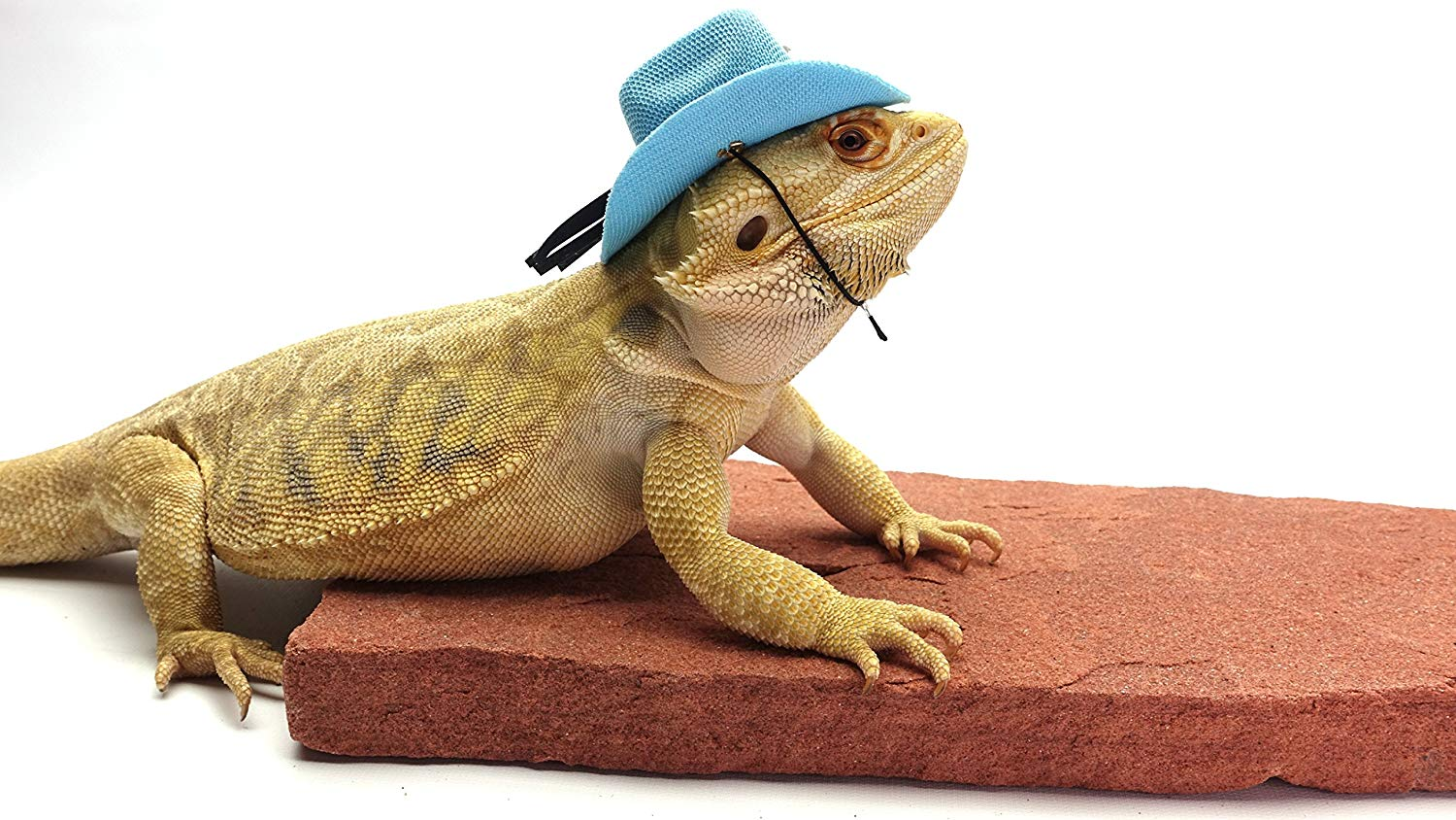 Florida school finds bearded dragon in student's backpack