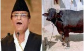 After buffaloes, politician now booked for stealing goats
