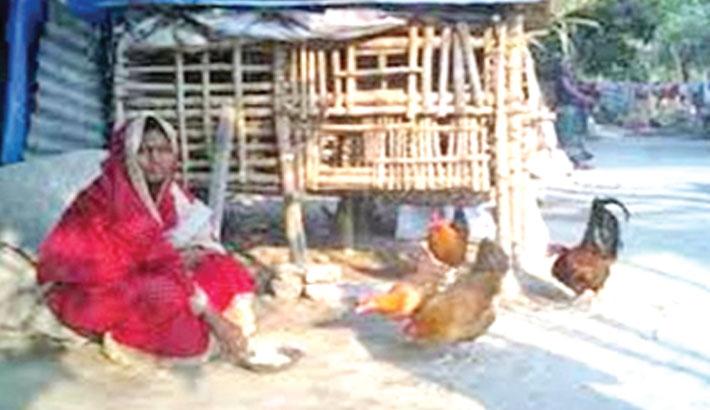 Poultry birds rearing bring smiles to Rajshahi marginalised women