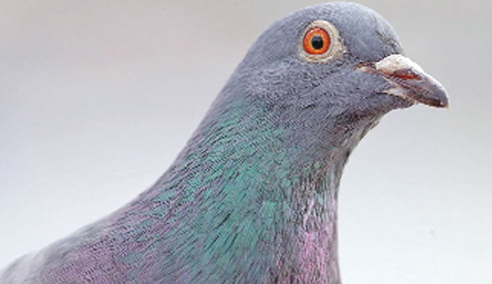 CIA unveils Cold War spy-pigeon missions