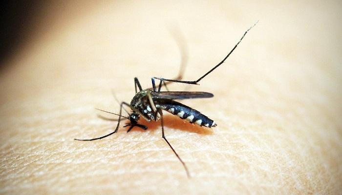97 percent dengue patients return home