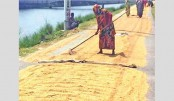 Record 1.48 lakh tonnes Aush paddy output in Rangpur