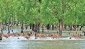'Save Sundarbans' plan in the offing