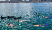 New Zealand bans dolphin swimming