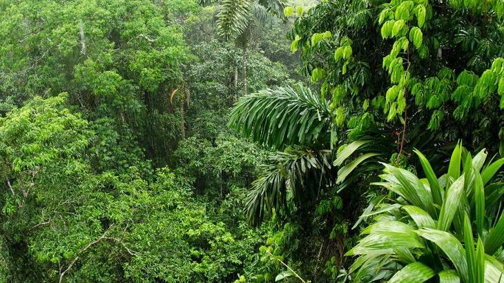 Amazon Forest and Bangladesh Forests Meeting the Same Fate
