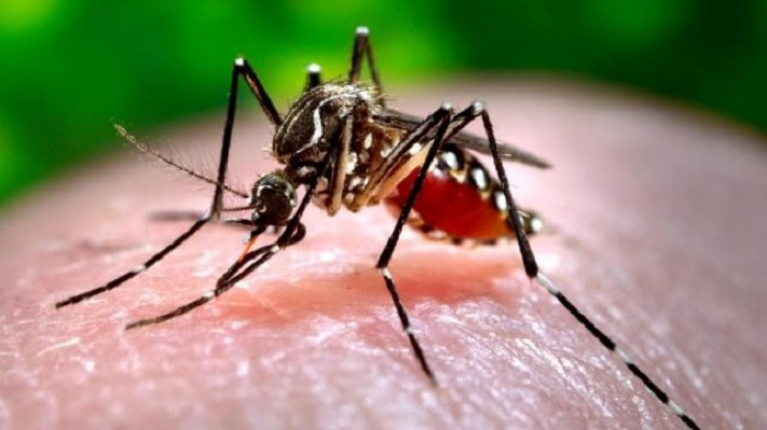 615 new dengue patients hospitalised in 24 hours