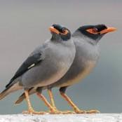 Steps taken for safe habitat for native birds