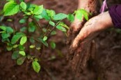 Tree-planting to offset carbon emissions: no cure-all