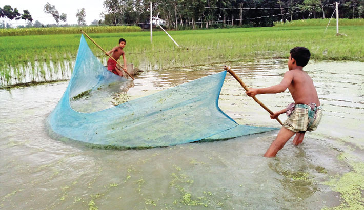 Two boys are busy fishing with net (traditional fishing net)