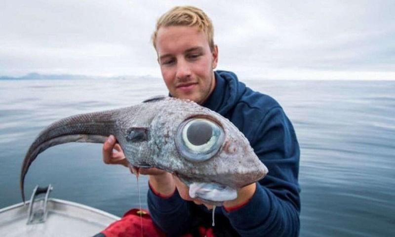 Man catches 'dinosaur-like' fish with giant eyes