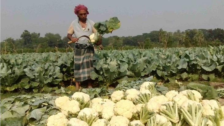 Early variety winter vegetables raise hope among Jashore farmers