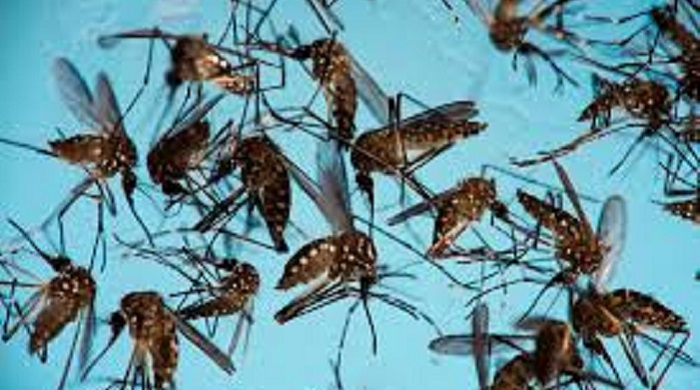 DGHS to start mosquito survey on 4 divisions Saturday