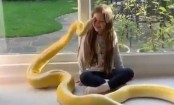 Little girl playing with her pet python