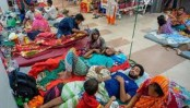 430 new dengue patients hospitalised in 24 hrs