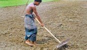 A farmer prepares seedbed by using traditional agriculture device