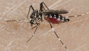 461 new dengue patients hospitalised in 24 hrs