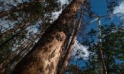 Germany's climate-stressed trees face 'catastrophe' as bugs attack