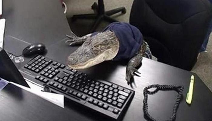 Man shares image of 'crocodile receptionist'