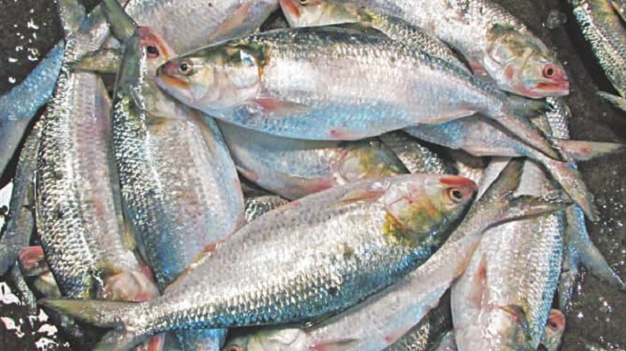 Hilsa export to India gets stuck at Benapole port