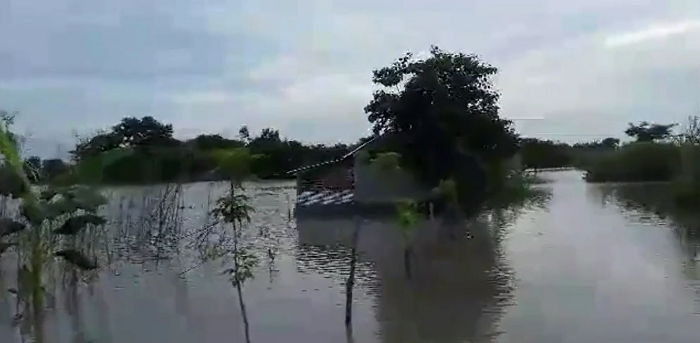 Padma continues to swell in Natore; 18 chars inundated