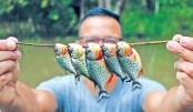 Fishing for piranhas in Amazon