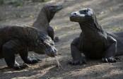 Indonesia scraps plans to close Komodo Dragon Island