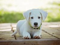 Dog at home means better cardiovascular health