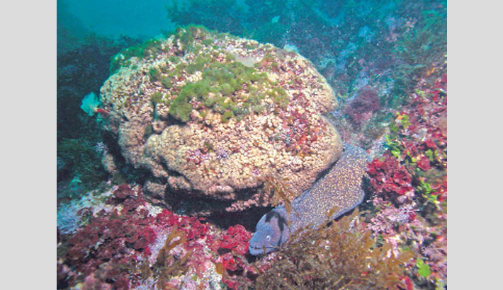 Back from the dead: Some corals regrow after 'fatal' warming