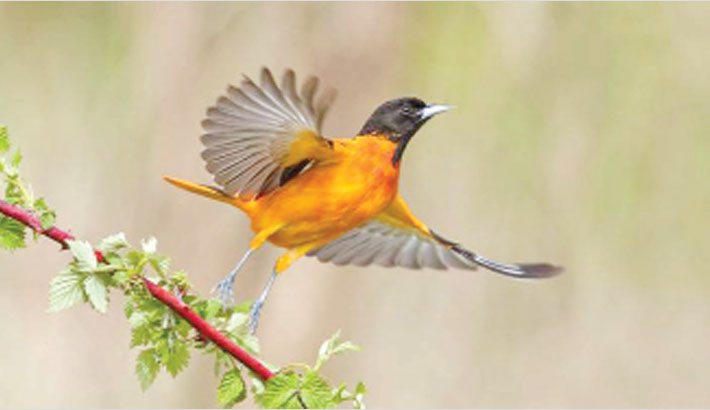 N American birds face risk of extinction